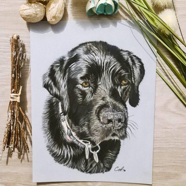 Portrait pastels chien